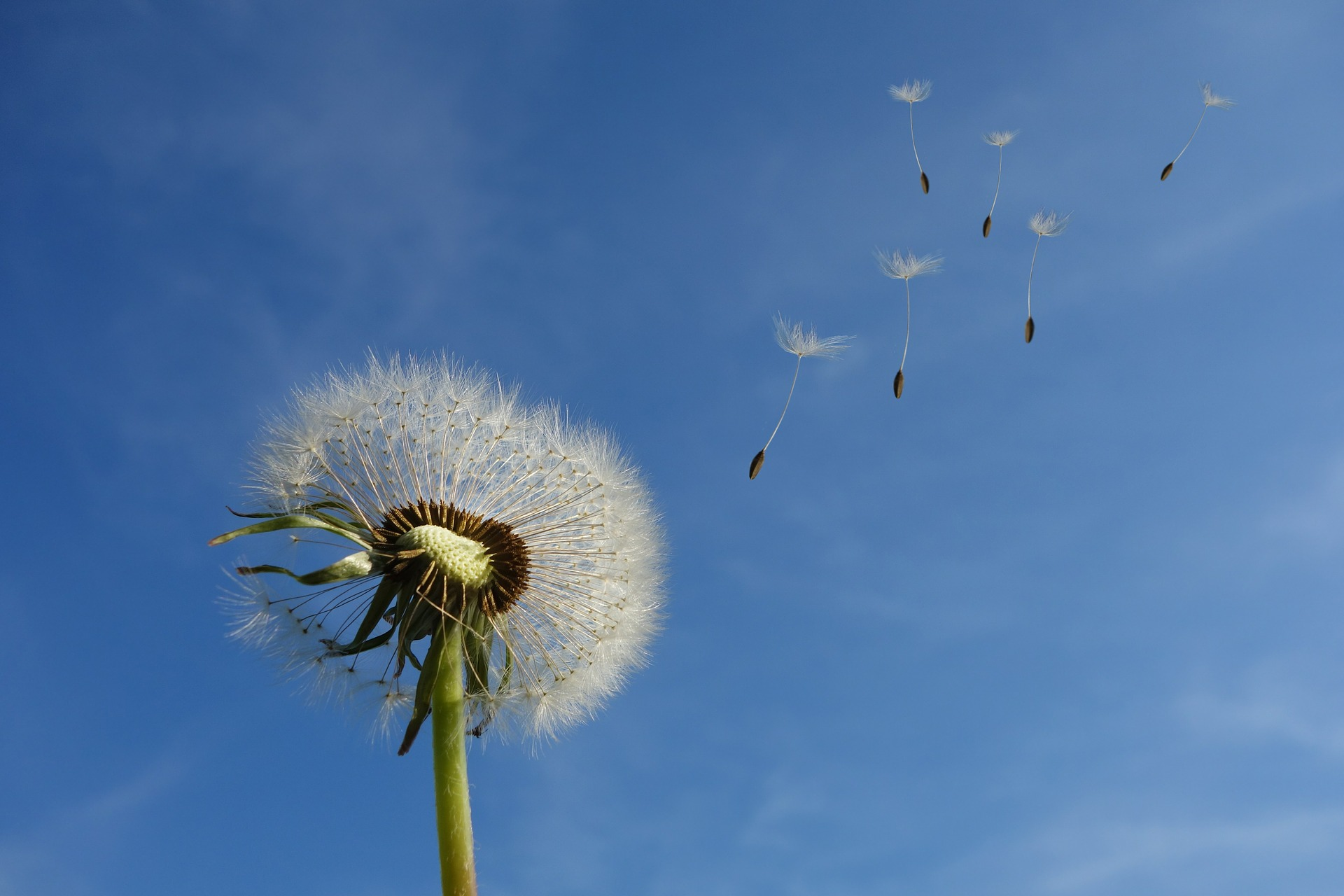 The wind blows wherever it wishes (John 3:8)
