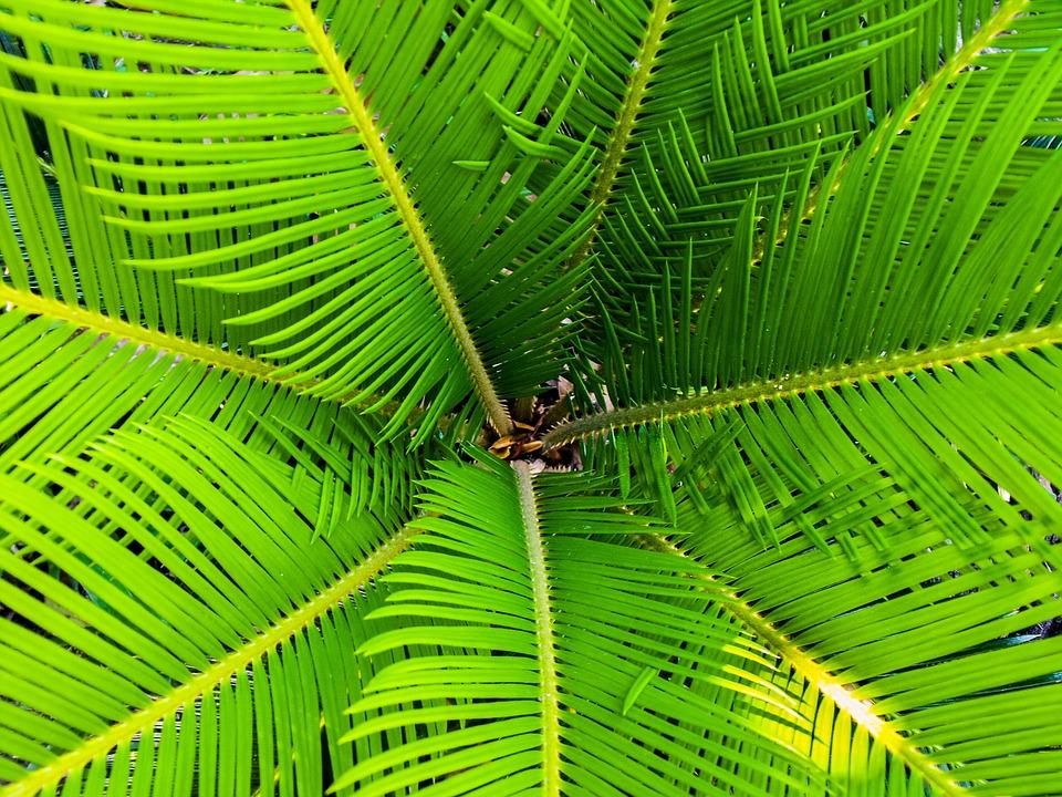 Palm tree Pixabay CC0